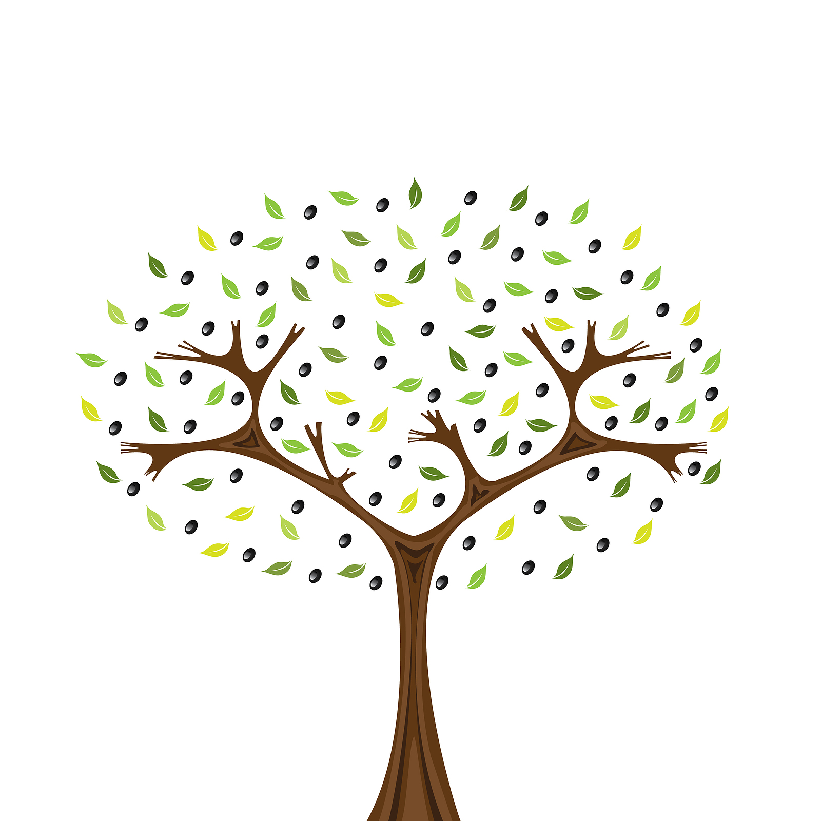 Illustration of olivetree