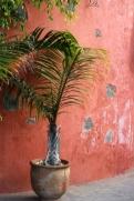 OO&L Tenerife Adeje 9
