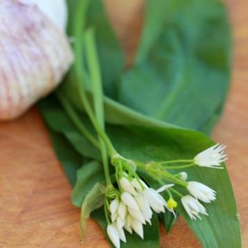 OO&L Wild Garlic